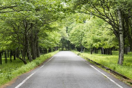 early summer: Forest Road - Japanese early summer -