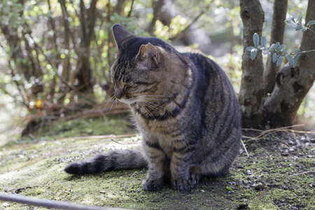 Beautiful and cute Feral cats