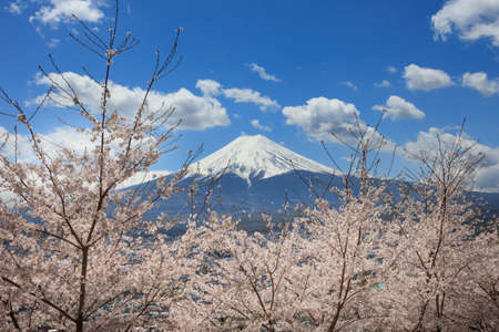 Cherry blossoms in spring and Mount Fuji Stock Photo