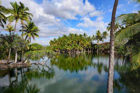 Een groep palmen die aan de oevers van de vijver liggen - Big Island of Hawaii - Stockfoto