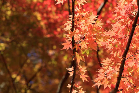 Former Karuizawa in autumn with autumn leaves under the blue sky