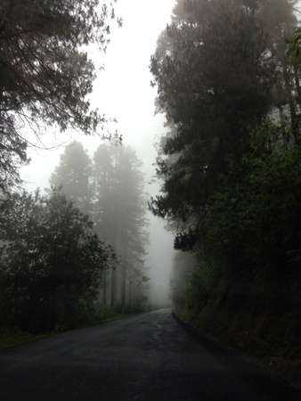 misty road with trees
