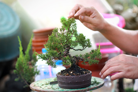 Bonsai pruning Handmade accessories wire and scissor bonsai tools.
