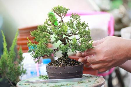 Poda de bonsái Accesorios hechos a mano con alambre y tijeras para bonsái.