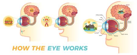 Come funziona l'occhio?
