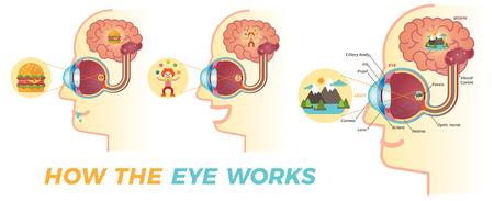 How the eye works Illustration