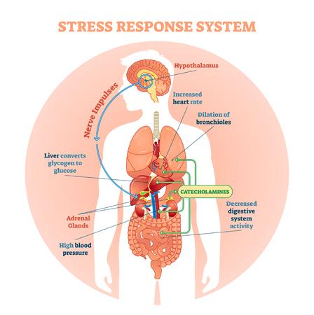 Schéma d'illustration vectorielle du système de réponse au stress, schéma des impulsions nerveuses. Informations médicales éducatives. Vecteurs