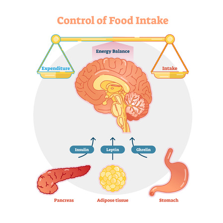 Food intake control vector diagram illustration, educational medical information