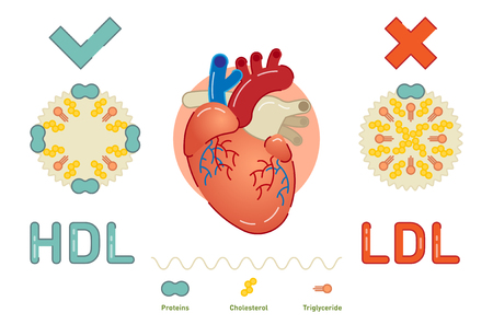 What is Lipoprotein - illustrated explanation, vector diagram illustration Vettoriali