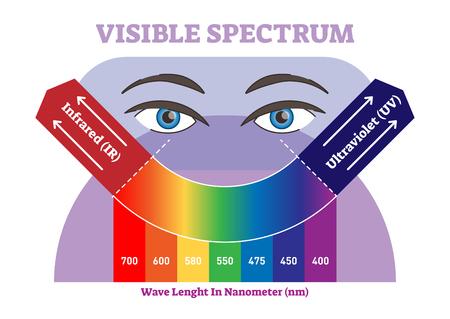 Diagramme d'illustration vectorielle spectre visible, jeu de couleurs de l'échelle de couleurs infrarouge à ultraviolets. Information scientifique et pédagogique. Vecteurs