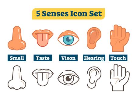 Cinco sentidos do corpo humano: olfato, paladar, visão, audição, tato. Ícones de ilustração plana de vetor