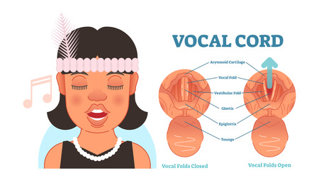 Vocal cord anatomy vector illustration diagram, educational medical scheme with vocal folds. 矢量图像
