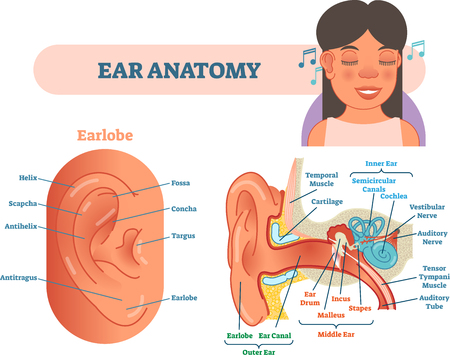 Ear anatomy medical vector illustration Çizim