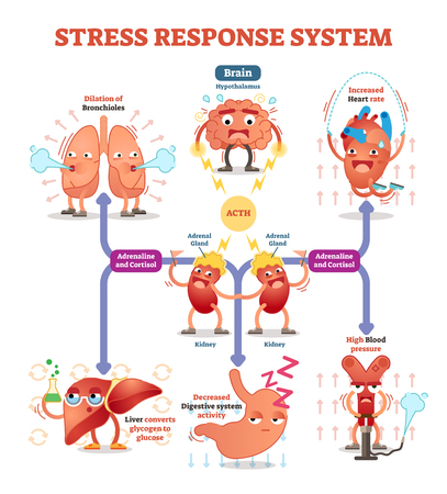 Stress response system vector illustration diagram, nerve impulses scheme.