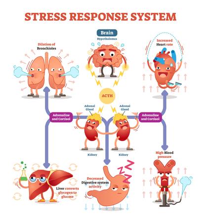 Stress respons systeem vector illustratie diagram, zenuwimpulsen regeling. Stock Illustratie