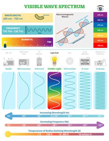 Fale elektromagnetyczne: widmo fal widzialnych. Schemat ilustracji wektorowych z długością fali, częstotliwością, szkodliwością i strukturą fal. Informacje edukacyjne o nauce. Plakat informacyjny. Ilustracje wektorowe