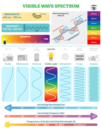 Electromagnetic Waves: Visible Wave Spectrum. Vector illustration diagram with wavelength, frequency, harmfulness and wave structure. Science educational information. Info poster. Illustration