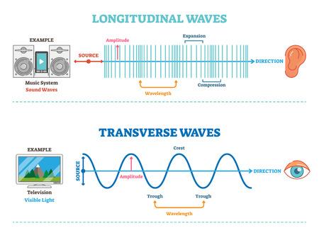 Längs- und Querwellenart, wissenschaftliches Diagramm der Vektorillustration mit Wellenstruktur und Unterschied. Prinzip der akustischen und visuellen Wahrnehmung.