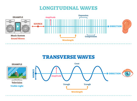 Longitudinal and Transverse wave type, vector illustration scientific diagram with wave structure and difference. Sonic and visual perception principle. Ilustração