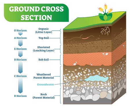 Illustration vectorielle de coupe transversale au sol avec des niveaux organiques, de la couche arable, du sous-sol et d'autres horizons.