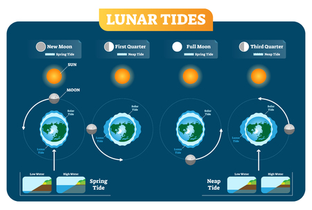 Lunar and Solar tides vector illustration diagram poster infographic. Spring and Neap tide. Gravitation force influence on the water levels and coastline. Geography and astronomy science.