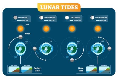 Mareas lunares y solares vector ilustración diagrama cartel infografía. La primavera y la marea de Neap. La influencia de la fuerza de gravitación en los niveles de agua y la costa. Geografía y astronomía.