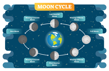 Moon cycle vector illustration diagram poster with all moon phases from new to full moon and waning, waxing, quarter stages. Scene on cosmos background. Stock Illustratie