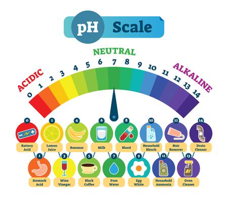 Diagrama de ilustración de vector de medición de escala de pH ácido con iconos de ejemplo ácidos, neutros y alcalinos. Tabla de niveles de ácido. Ilustración de vector