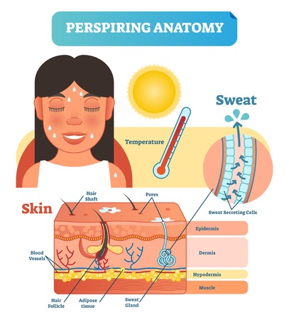 Perspiring Anatomical Human Skin Layers Cross Section Vector Illustration Diagram Poster