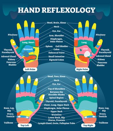 Schéma d'information sur la réflexologie des mains.