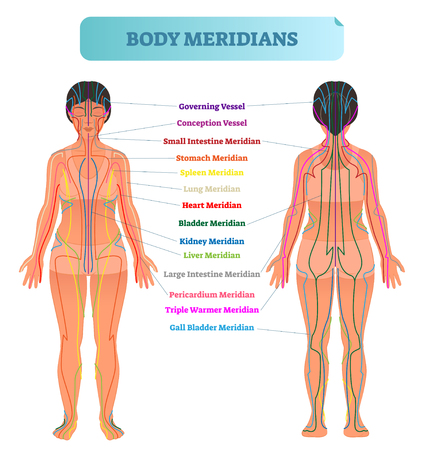 Esquema de ilustración de vector de sistema de meridianos corporales, gráfico de diagrama de terapia de acupuntura de energía china. Cuerpo femenino con trayectorias energéticas y órganos internos correspondientes. Ilustración de vector