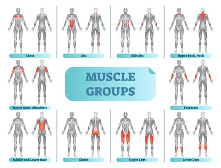 Anatomische Fitnessvektorillustration der weiblichen Muskelgruppen, informative Tabelle des Sporttrainings.