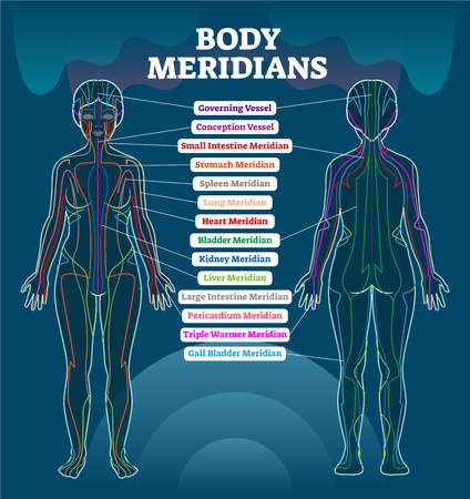 Body meridian system vector illustration scheme, Chinese energy acupuncture therapy diagram chart. Female body with energy paths and corresponding inner organs.