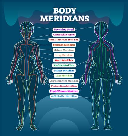 Esquema de ilustración de vector de sistema de meridianos corporales, gráfico de diagrama de terapia de acupuntura de energía china. Cuerpo femenino con trayectorias energéticas y órganos internos correspondientes.