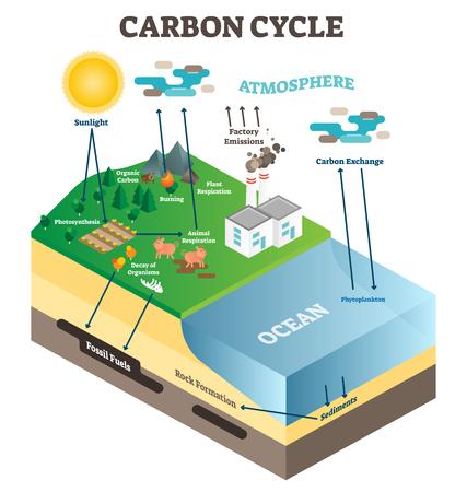 Ciclo de intercambio de carbono de la atmósfera en la naturaleza, escena de diagrama de ilustración de vector de ciencia de ecología de planeta tierra con océano, animales, plantas y fábrica industrial. Cartel de información educativa.