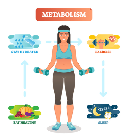 Metabolism concept vector illustration diagram, biochemical body cycle. Eating healthy, drinking water, exercising and sleeping well. Human wellbeing poster. Illustration