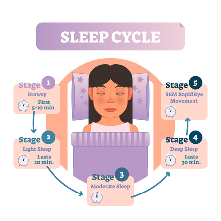 Healthy human sleep cycle vector illustration diagram with female in bed and sleep stages. Educational circle type infographic scheme with arrows.