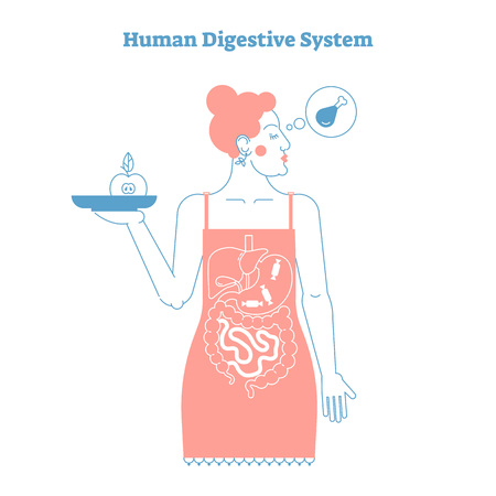 Human Digestive System anatomical line style artistic vector illustration, medical education cross section poster with food diet choices and stylized inner digestive female organs Иллюстрация