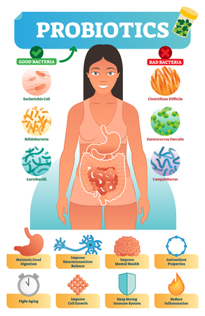 Vector illustration with probiotics. Medical educational scheme and labeled diagram with escherichia coli, bifidobacteria, lactobacilli, clostridium difficile, enterococcus faecalis and campylobacter.