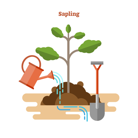 Sapling process flat vector illustration. Drawn gardening and seedling with green sprout, watering can and shovel in dirt and soil. Young tree with stem, brunches and leaves. Ecological botany basics. Illustration