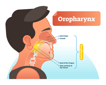 Oropharynx vector illustration. Anatomical labeled scheme with human soft palete, tonsils, back of tongue and side of throat. Diagram for pulmonary and throat medicine. Human with mouth and trachea. Ilustração