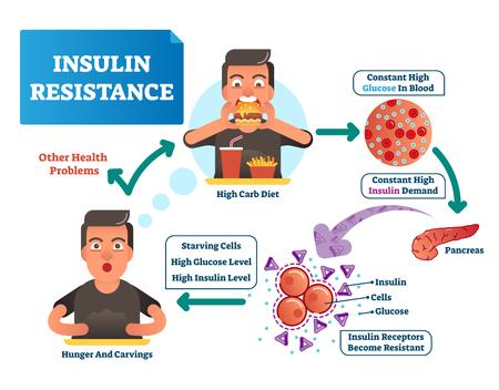 Ilustración de vector de resistencia a la insulina. Esquema etiquetado con todo el ciclo de proceso. Glucosa alta en sangre, demanda constante. Diagrama médico de cómo los reporteros se vuelven resistentes, el hambre, las tallas y la dieta en carbohidratos
