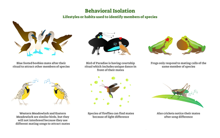 Behavioral isolation vector illustration collection set. Lifestyles or habits used in nature to identify members of species with examples of blue footed boobies, birds, frogs, fireflies and crickets. Illustration