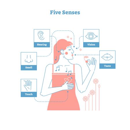 Cinco sentidos humanos, experiencia sensual cartel de ilustración de vector de diseño gráfico de estilo de contorno artístico con iconos femeninos y de 5 sentidos: mano táctil, olfato de nariz, oído de oído, ojo de visión y labios de gusto.