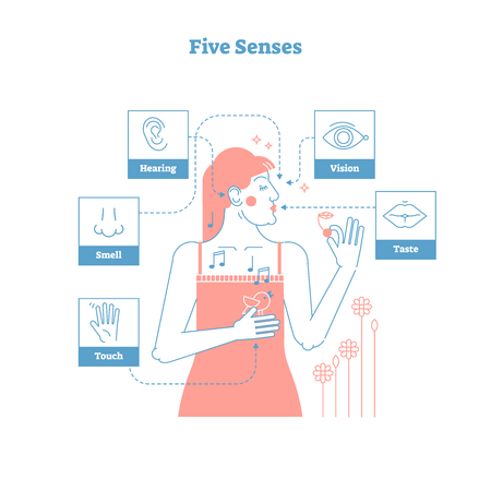 Five human senses, sensual experience artistic outline style graphic design vector illustration poster with female and 5 senses icons - touch hand, smell nose, hearing ear, vision eye and taste lips.