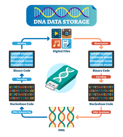 DNA data storage infographic vector illustration. Explained DNA file collection with binarization, encoding, synthesis, sequencing and decoding. Full circle to DNA files. 일러스트