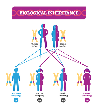 Biological inheritance vector illustration infographic. Educational biology scheme with parents, son and daughter. Carrier father, mother and affected offspring diagram.