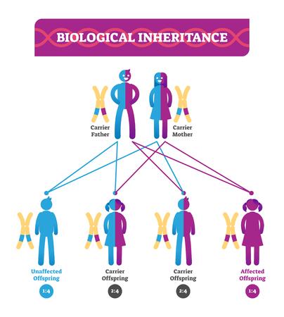 Infografía de ilustración de vector de herencia biológica. Programa de biología educativa con padres, hijo e hija. Diagrama portador padre, madre e hijo afectado.