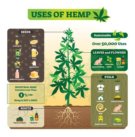 Usi dell'illustrazione vettoriale di canapa. Semi, foglie, fiori, radici e stelo vengono utilizzati per cucinare olio, burro, combustibile, lettiera e altro. Applicazione di erba di marijuana senza THC. Vettoriali