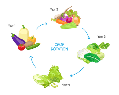 Crop rotation agricultural practice, farming seasonal cycle, soil nutritional energy renewal system, vector illustration diagram with drawn vegetables.